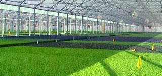Fog System para Invernaderos