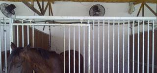 Nebulización en establos para Caballos